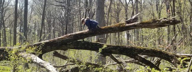 Brave Boy Climbs High